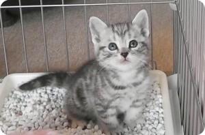 かわいい子猫が我が家にやってきた!まずはケージにミイの居場所を。