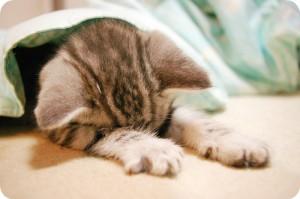 まさかのさっそくの獣医!うちの猫、ミイは「猫パルボウイルス」かもしれない?!