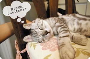 他のネコちゃん大紹介!可愛らしい「ネコうさぎ」など4記事ご紹介。