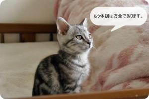 2日続いた子猫の謎の発熱!でも3日目にはケロリと治りました。