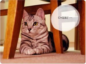 子犬・子猫の販売が生後56日は販売禁止に。私は大賛成です。