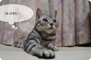 おすすめネコ漫画「ペン太のこと」のご紹介と感想。涙なしには語れません。
