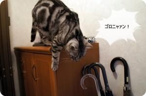 「掛け声」をよく出すおしゃべりなうちの猫。言葉も大体理解してそうです。