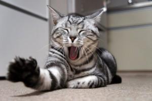 猫の変顔を撮る道は険しい。ミイさんの変顔をちょこっと紹介。